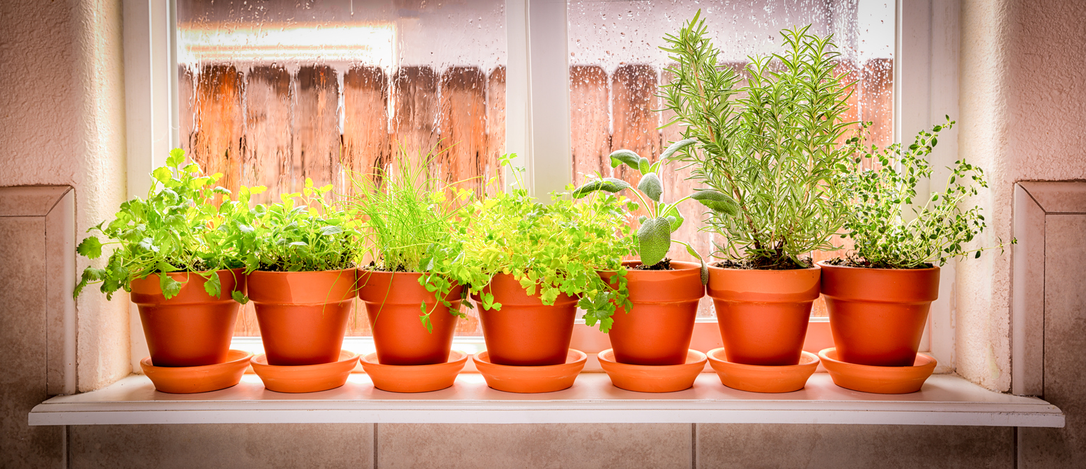 variety of herbs in a windowsill plant garden