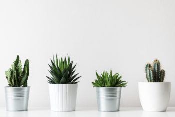 plants to freshen the air