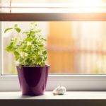 a picture of a small apartment food garden in a windowsill