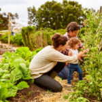 family working in an organic garden