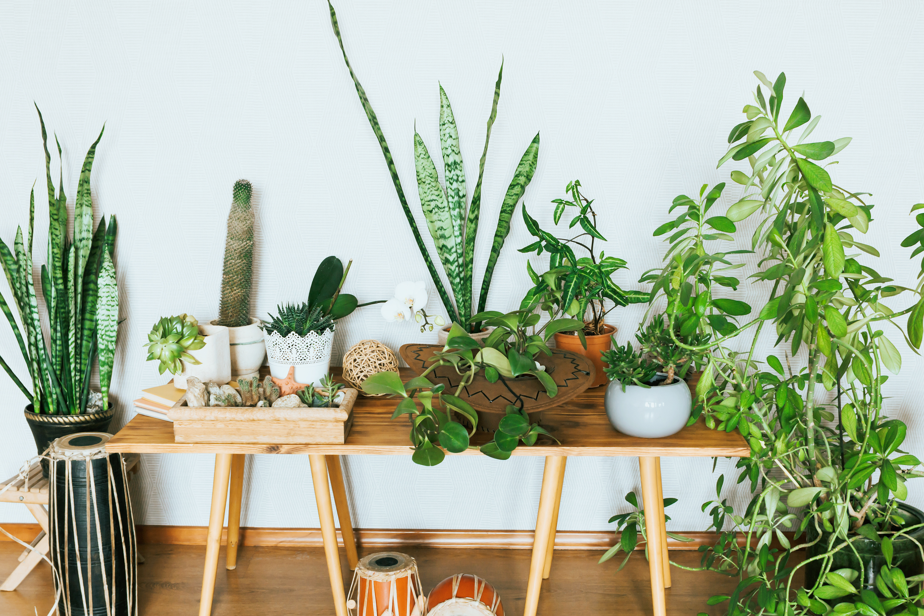 Keeping house plants and watering with recycled water is one of many great eco-friendly habits