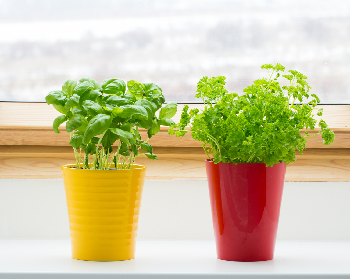 Common Mistakes While Indoor Gardening