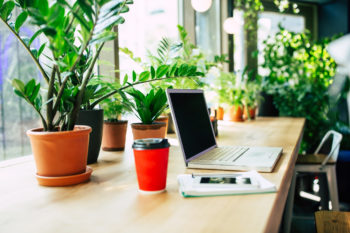 plants in a home office | healthy desk plants
